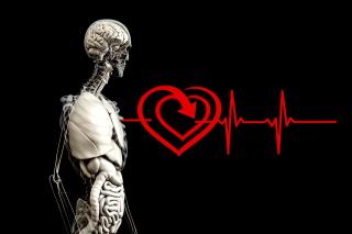Anatomy-2328534_960_720